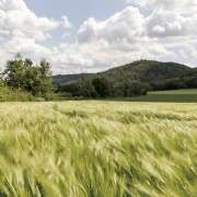 Overseas farmland