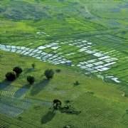 African farmland