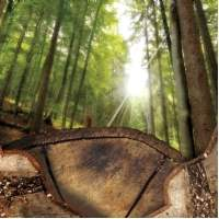 The Outlook for Forestry Investment