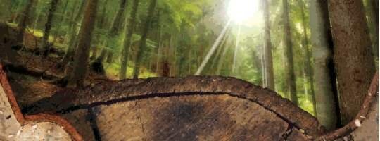 UK Forestry Market