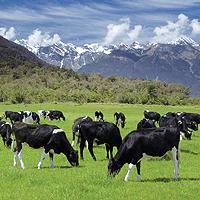 Market in Minutes: Global Farmland Index