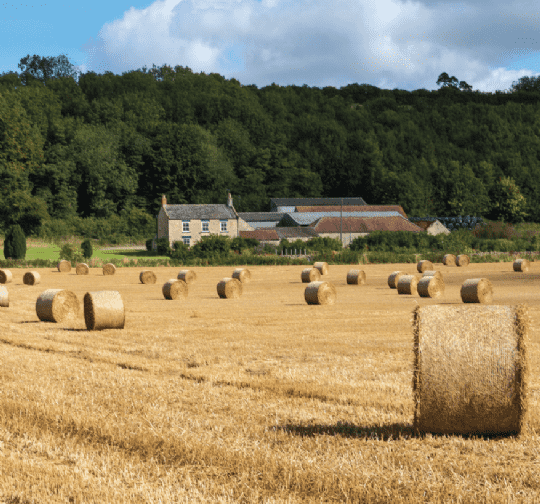 Demand remains strong for quality land