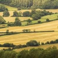 Harvest 2014 Benchmarking Survey Results