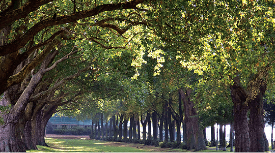 Putney has retained its open green spaces