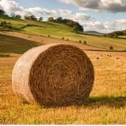 Commercial farmland