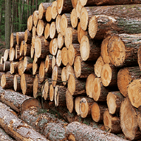 Demand for timber primed for growth